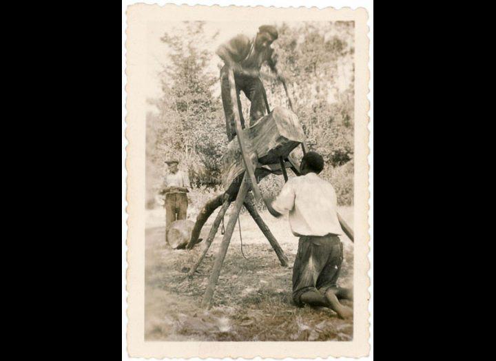 Serrando madeira de forma tradicional. / Autor descoñecido [1940-1960 (?)] / PROCEDENCIA: Recollida Budiño. Album familiar Benita Ramilo Pichel