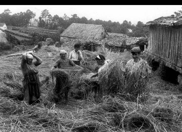 Grupo de labregos mallando a herba no lugar da Castiñeira. / Manuel Rodríguez Romero (?) [Ca. 1966] / PROCEDENCIA: Libro Crónica Gráfica de Budiño. Recollida Budiño