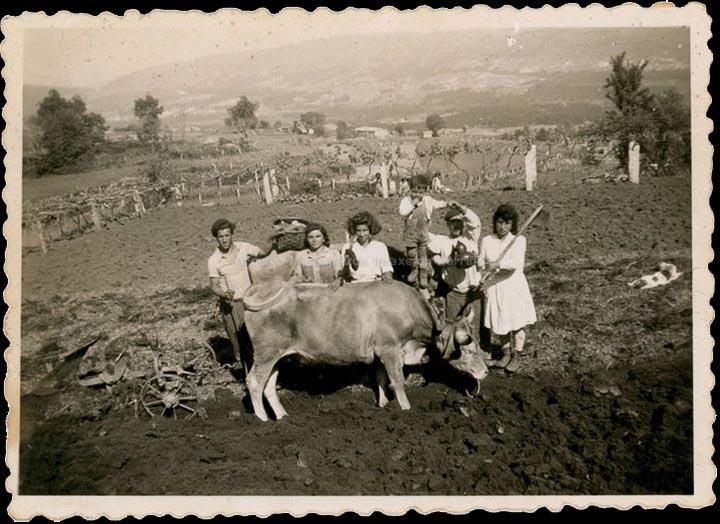 agricultura-e-ganderia_p_0014
