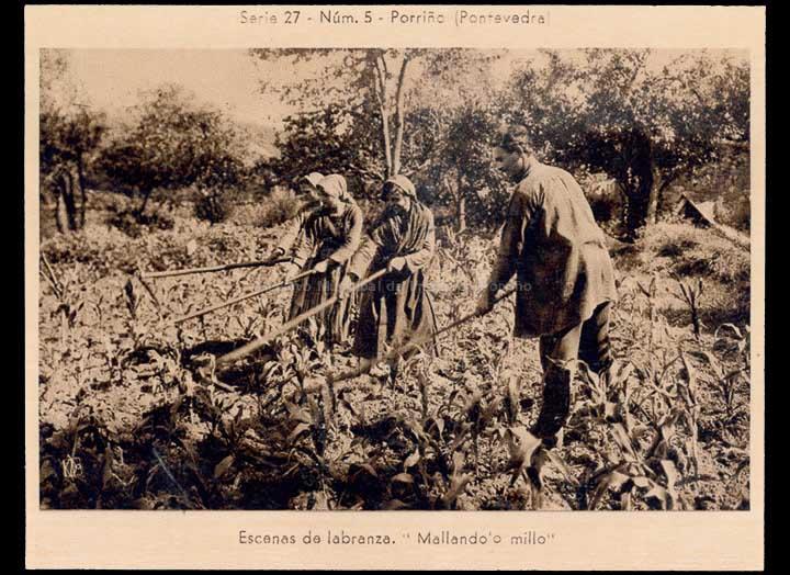 agricultura-e-ganderia_p_0016