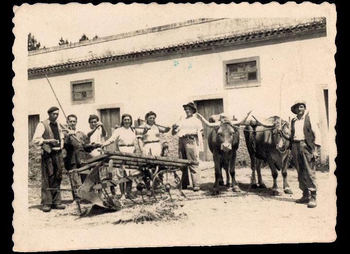 agricultura-e-ganderia_p_0022
