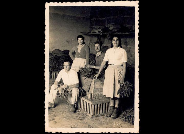 agricultura-e-ganderia_p_0023