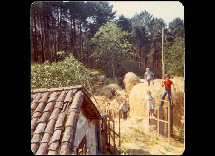 agricultura-e-ganderia_p_0025
