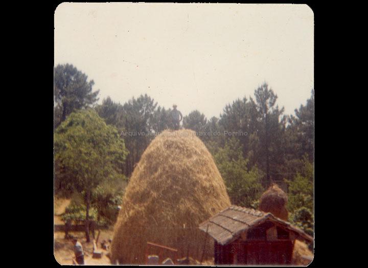 agricultura-e-ganderia_p_0026