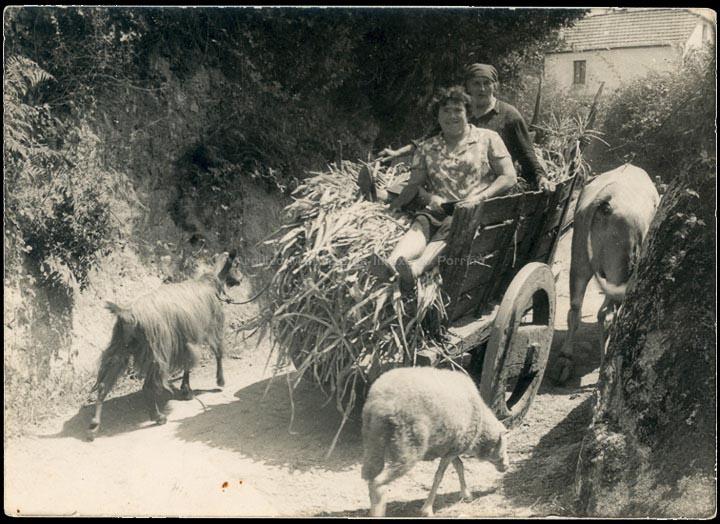 agricultura-e-ganderia_p_0031
