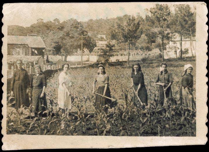 agricultura-e-ganderia_p_0032