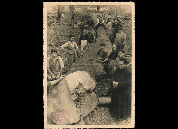 Tala do Pino do lugar da Granxa (Rape), Atios. Un exemplar centenario. / Foto Magno [Xuño 1956] / PROCEDENCIA: Recollida Atios. Álbum familiar de Demetria Domínguez Silva