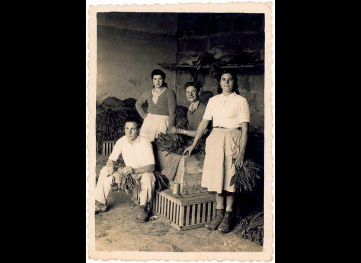 Traballando no enfardado de tabaco nas Gándaras. / Foto Balbino Ramírez (Salceda de Caselas) [1950 - 1960 (?)] / PROCEDENCIA: Recollida Budiño. Album familiar de Laura Besada Besada
