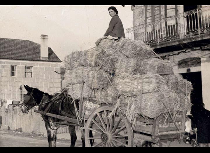 Elena Silva transportando palla trillada para a Granxa do Louro. / Foto Magno [1956- 1970] / PROCEDENCIA: Recollida Pontellas. Album familiar de Elena Silva